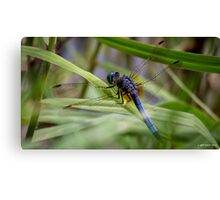 Dragonfly in the Grass Canvas Print