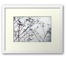 December Vegetation Framed Print