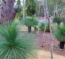 Grass Trees (Xanthorrhoea) by Elaine Teague