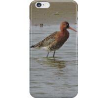 Black Tailed Godwit iPhone Case/Skin