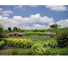 Meadow of Flowers Photographic Print