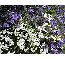 Lilac & White Floral Photographic Print