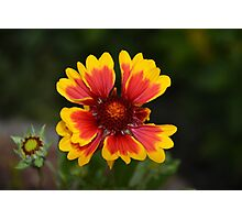 Garden delight Photographic Print