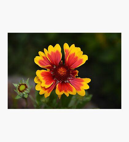 Garden delight Photographic Print