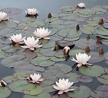 Thinking Of Monet by CreativeEm