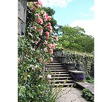 Wonderfully Welsh Floral Steps Photographic Print