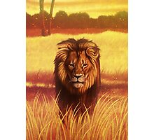 Lion The King of All Animals Photographic Print