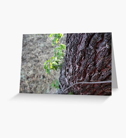 Skin of the earth  Greeting Card