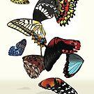Butterflies by Raewyn Haughton