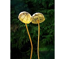 Two Little Shrooms Photographic Print