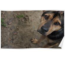 Puppy Dog Poster