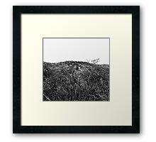 Scortched Trees  Framed Print