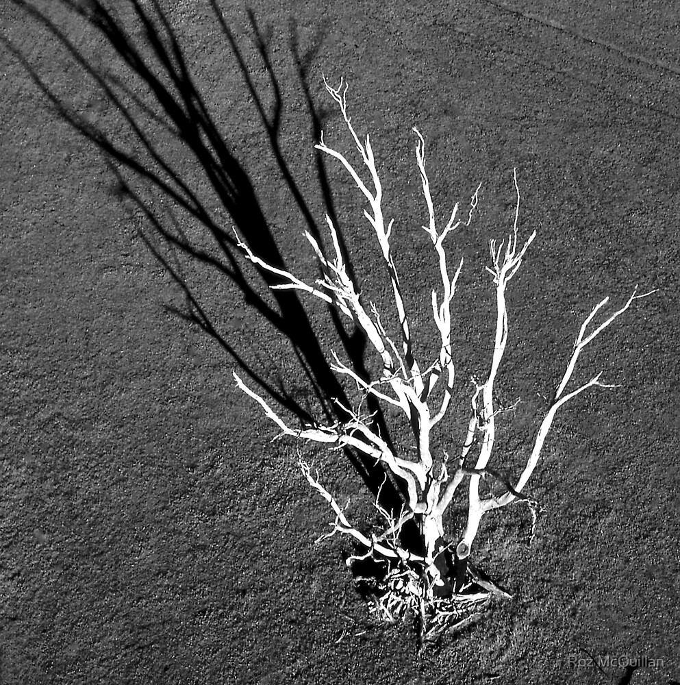 The White Tree, Benalla : aerial photograph by Roz McQuillan