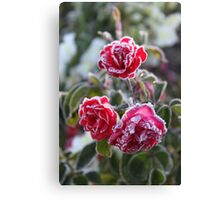 Frosted Roses Canvas Print