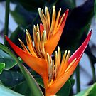 Bird Of Paradise by phil decocco
