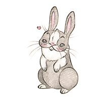Lovely Bunny Photographic Print