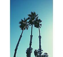 mas palm trees Photographic Print