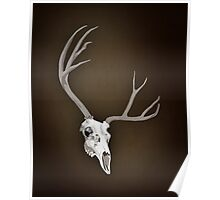 Brown Stag Poster