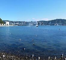 Wellington panorama by PhotosByG