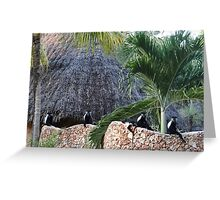 Colobus Monkey resting on a wall Greeting Card