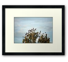 flock of crows in a tree Framed Print