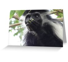Colobus Monkey eating leaves in a tree 2 Greeting Card