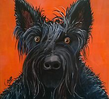 Fergus the Scottish Terrier by Caroline  Peacock