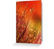 Water Drops on Blades of Grass Colorful Nature Greeting Card