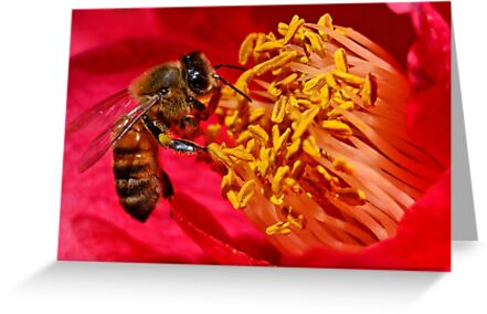 Bee on Flower Stamens by TJ Baccari Photography