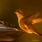 Dinning at Sunset a Hummingbird by browncardinal8