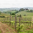 Tuscany Vineyard by dbvirago