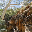 Ghost Gum, Standley Chasm by Linda Lees