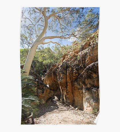 Ghost Gum, Standley Chasm Poster