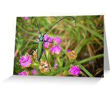 Longhorn beetle on Vygie Greeting Card