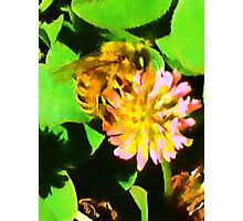 Bee and Clover Photographic Print