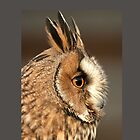 Long Eared Owl by Dave  Knowles