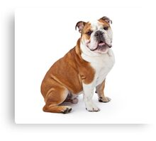 Lord Bulldog Canvas Print