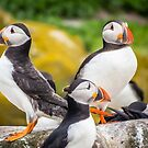 Puffin Sentries by vivsworld