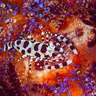 Coleman Shrimp by Mark Rosenstein