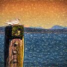 One Bird One Post by Steve Walser