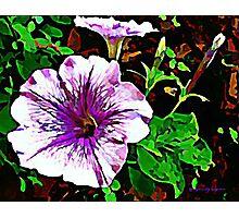 Purple Petunia Watercolor Photographic Print