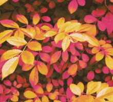 Foliage Hues - Orange and Pink Sticker