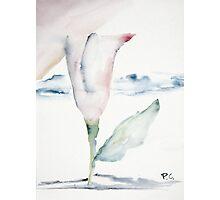 Flower Dreams Photographic Print