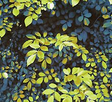 Foliage Hues - Dark Blue And Green by Shawna Rowe