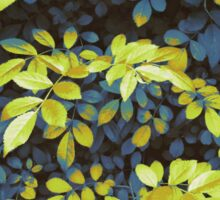 Foliage Hues - Dark Blue And Green Sticker