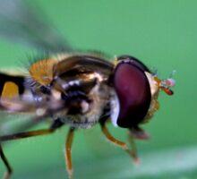 Bug hunt 1 Sticker