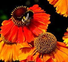 Busy doing bee things by kathrynanna