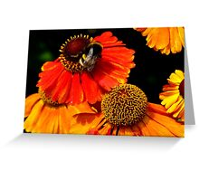 Busy doing bee things Greeting Card