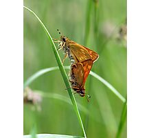 Skippers Photographic Print