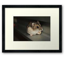 Oreo and the Corn Nut Framed Print
